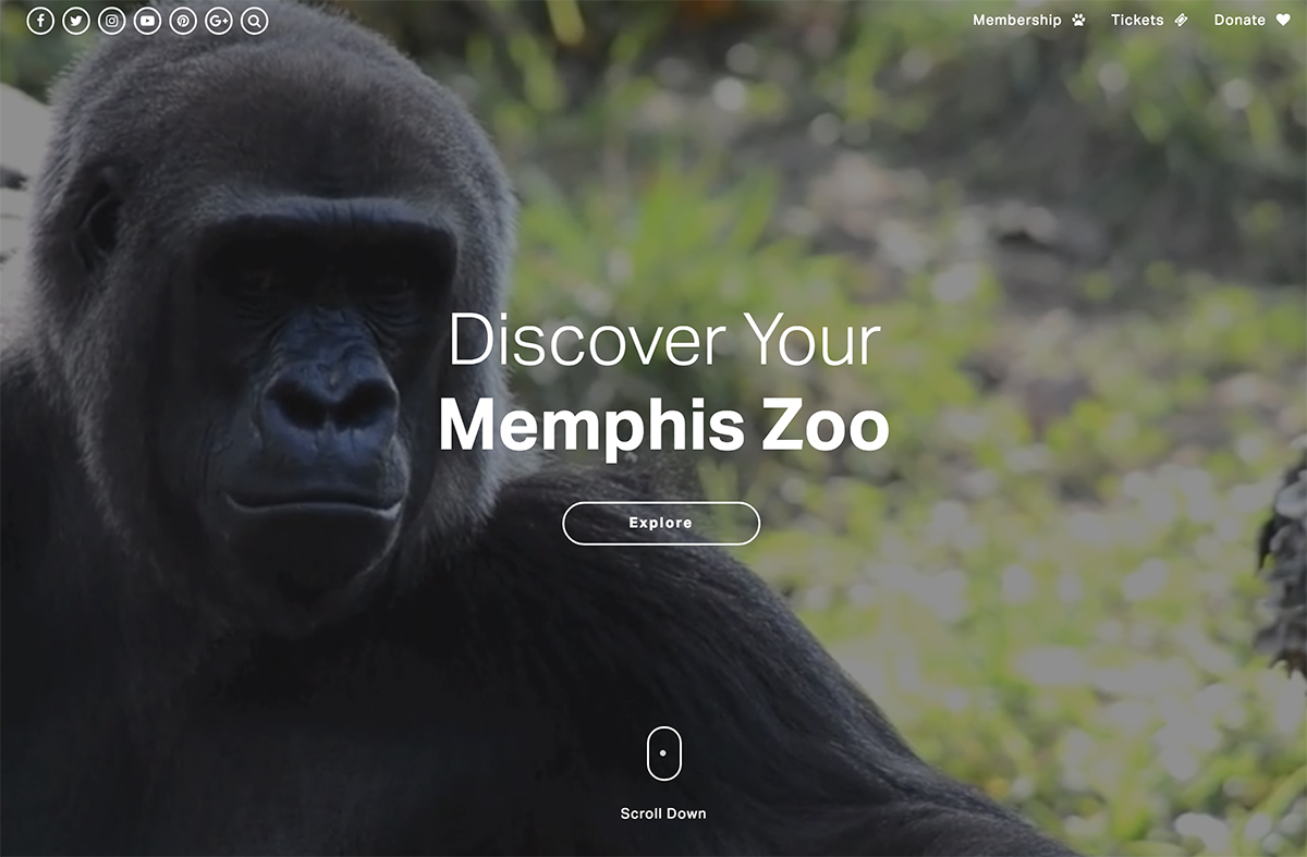 2018 best nonprofit website design inspiration - Memphis Zoo